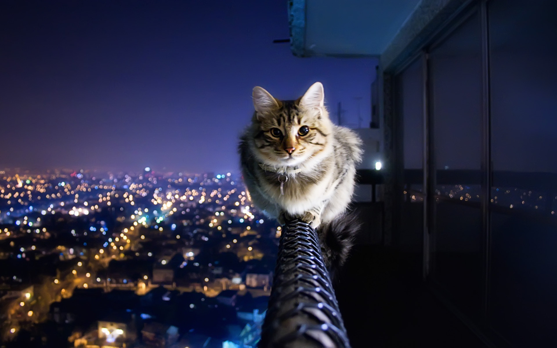 50+ Hình nền mèo dễ thương và đáng yêu nhất