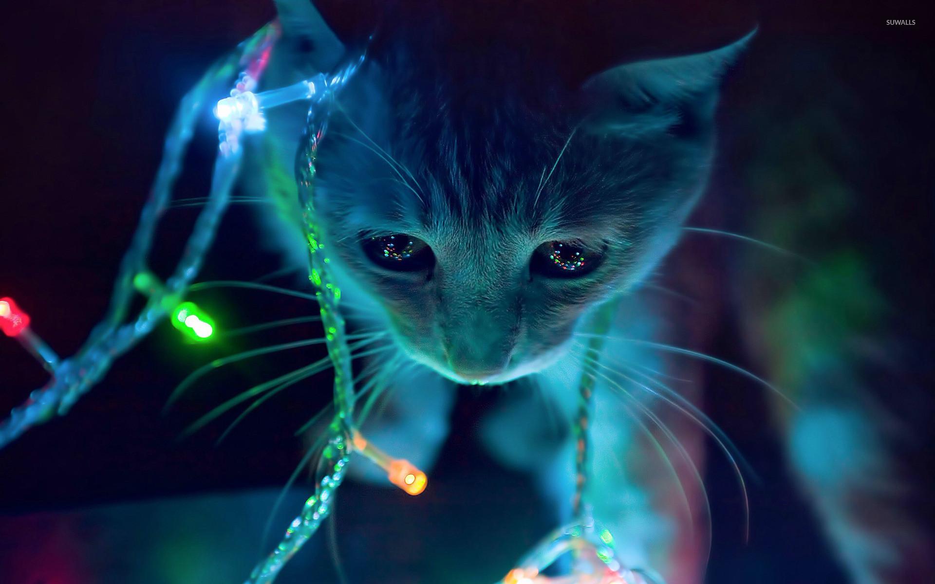 Hình nền mèo bóng tối ngộ nghĩnh