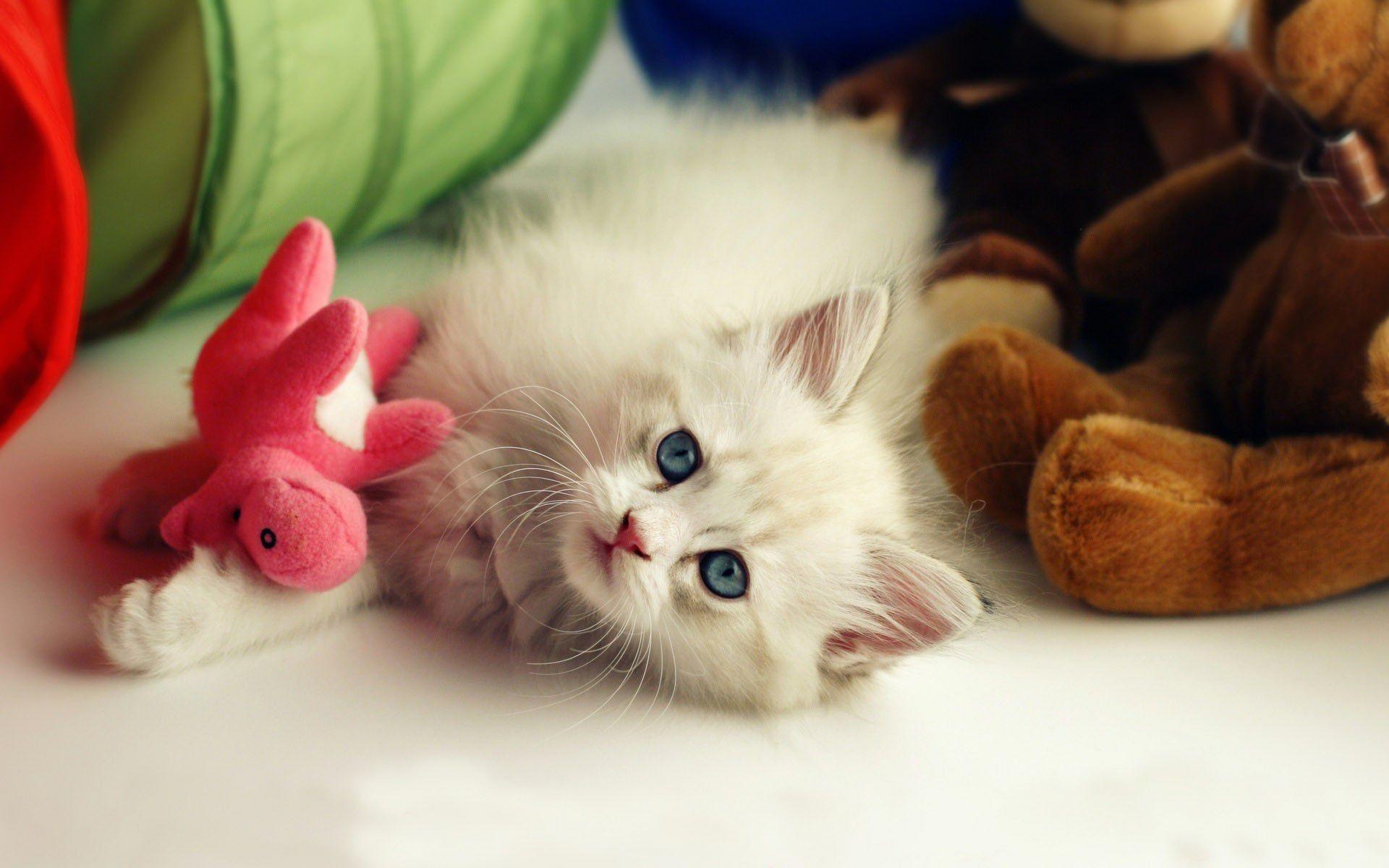 Hình nền mèo cute