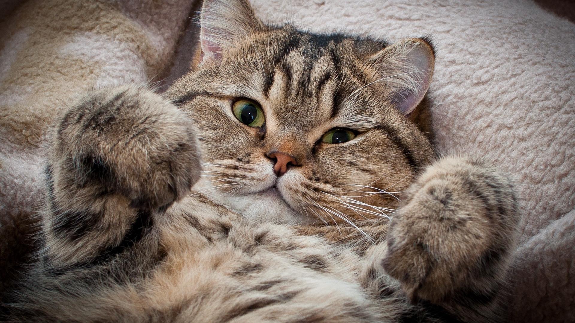 Hình nền mèo đáng yêu, dễ thương nhất thế giới