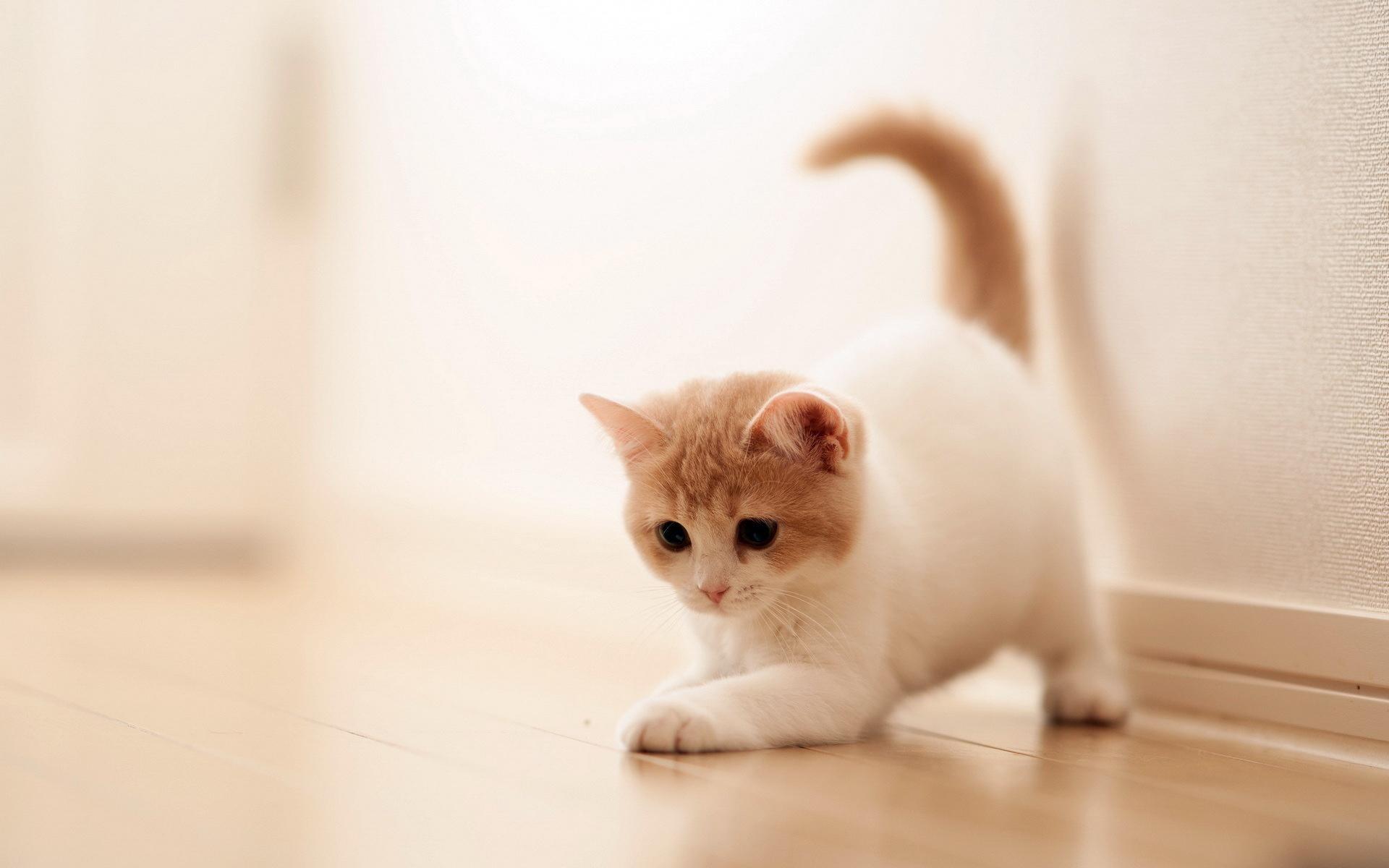 Hình nền mèo đáng yêu đẹp nhất