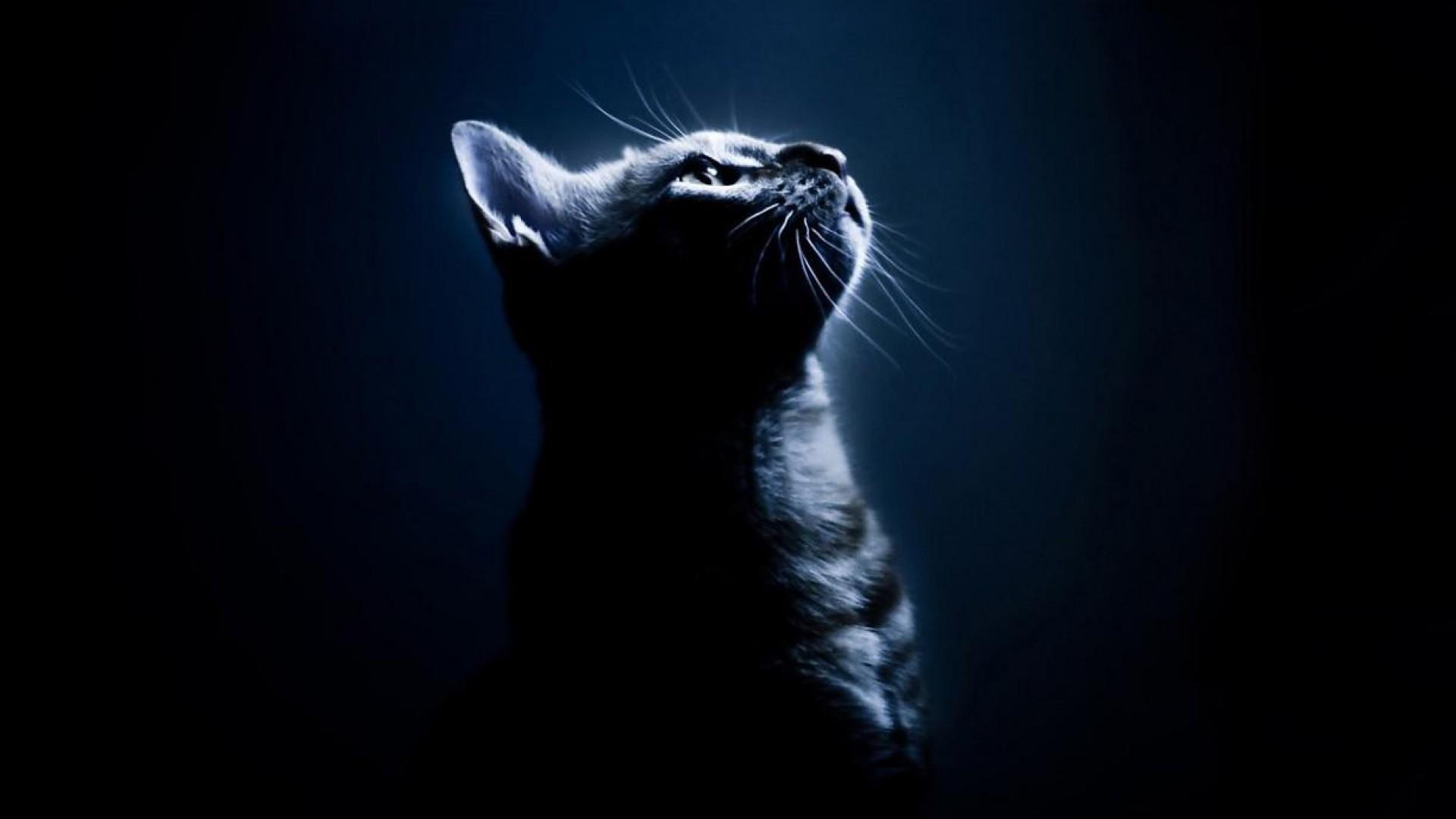 Hình nền mèo đáng yêu đẹp