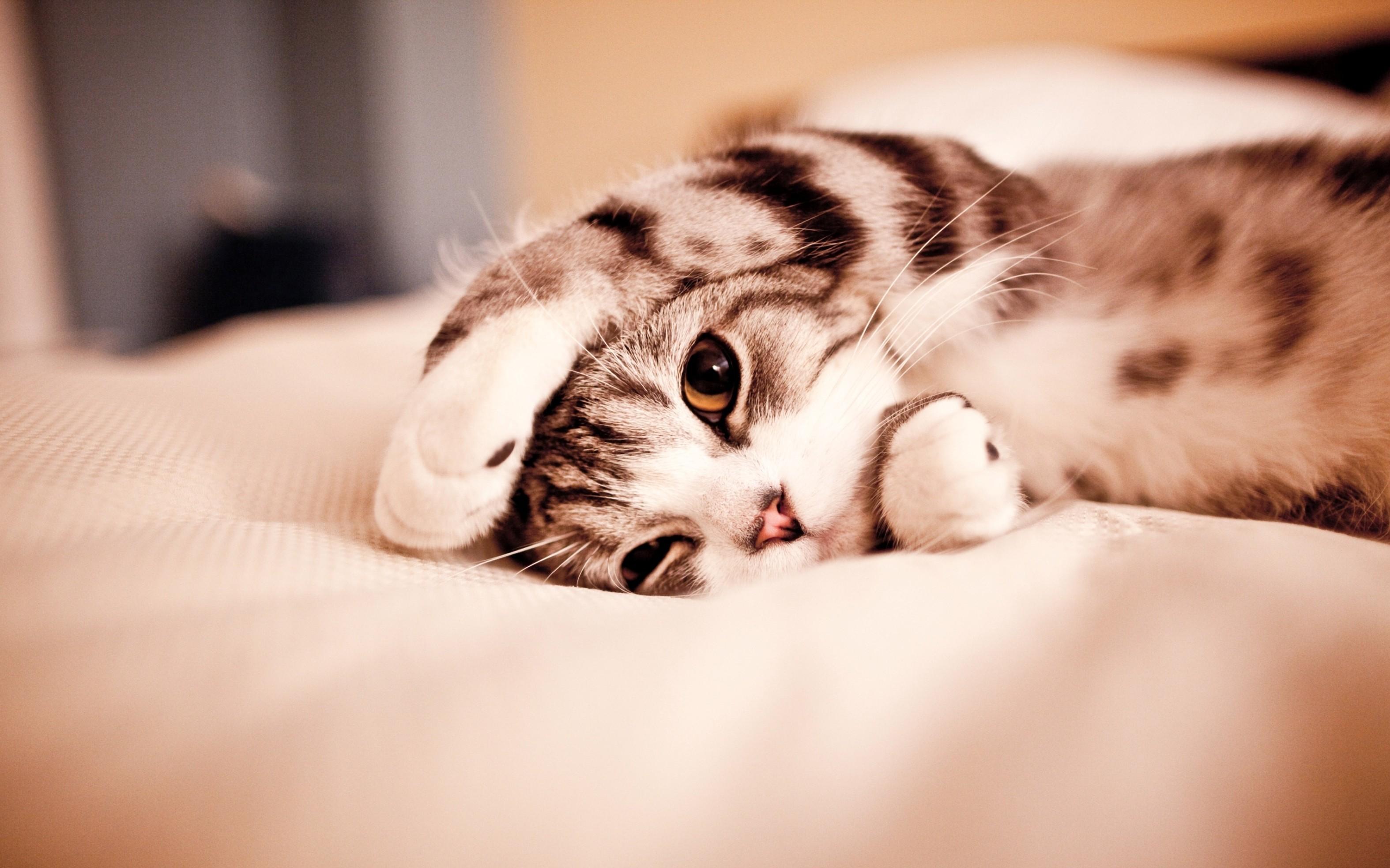 Hình nền mèo đáng yêu ngộ nghĩnh đẹp nhất