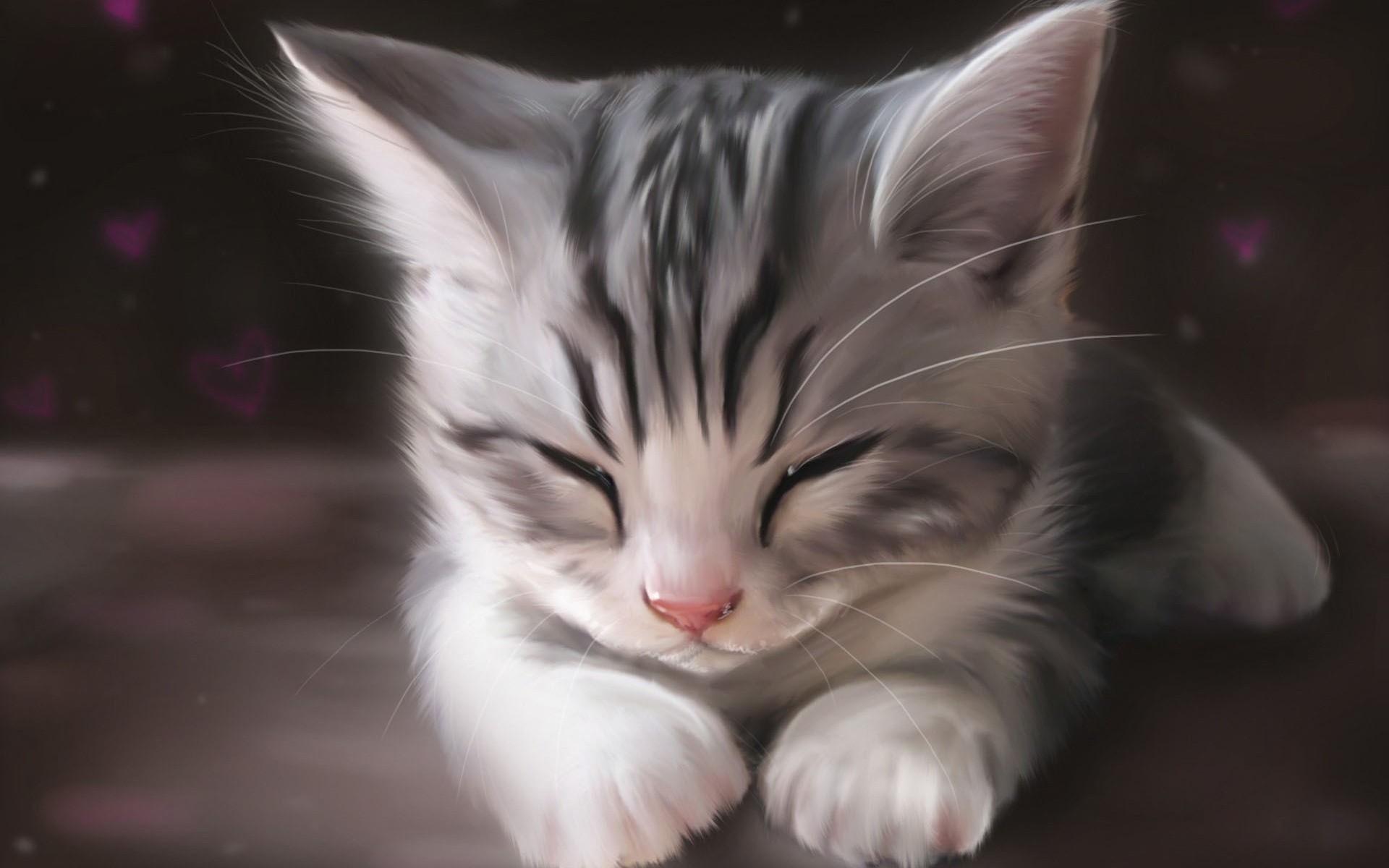 Hình nền mèo đáng yêu