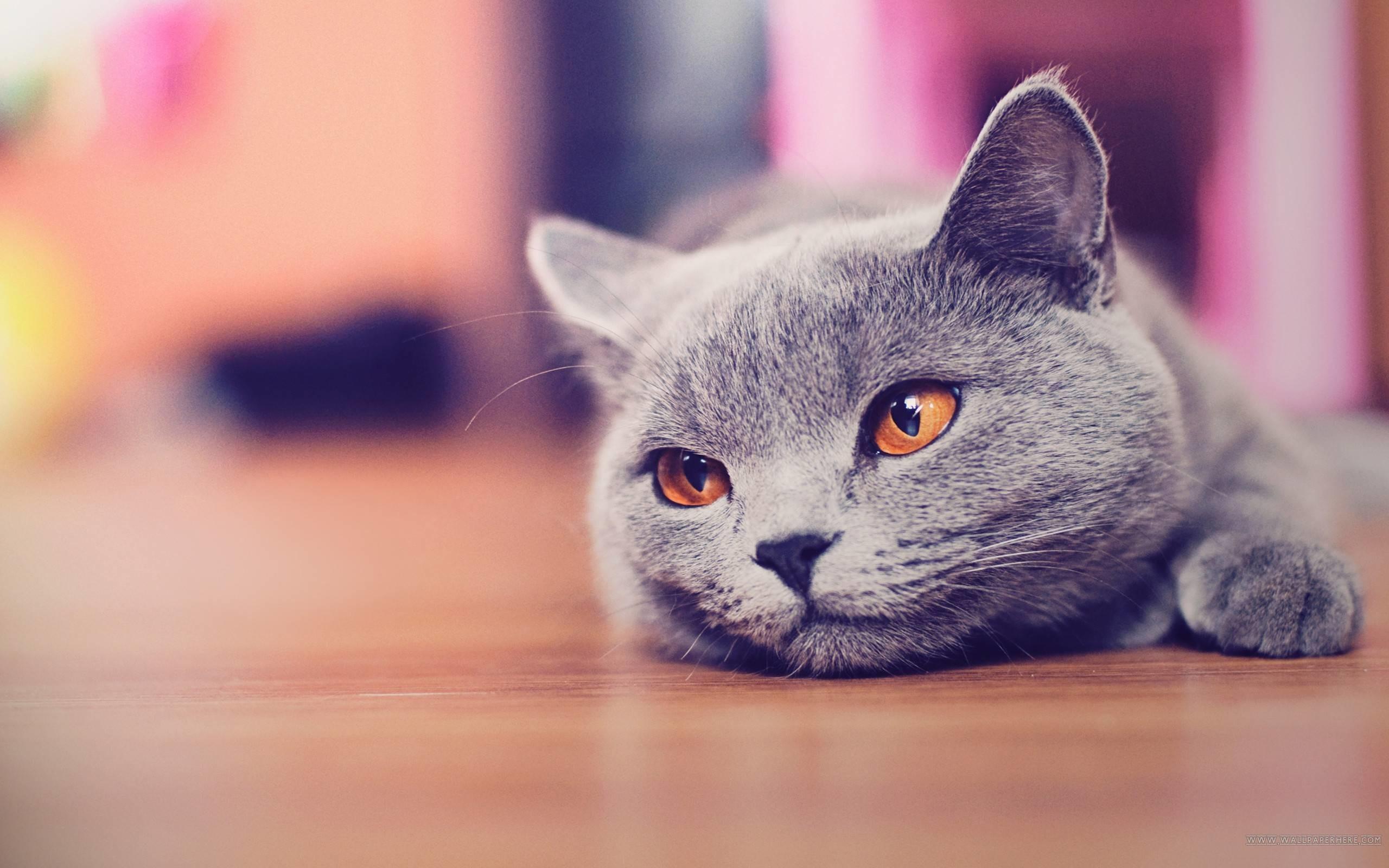 Hình nền mèo dễ thương buồn bã