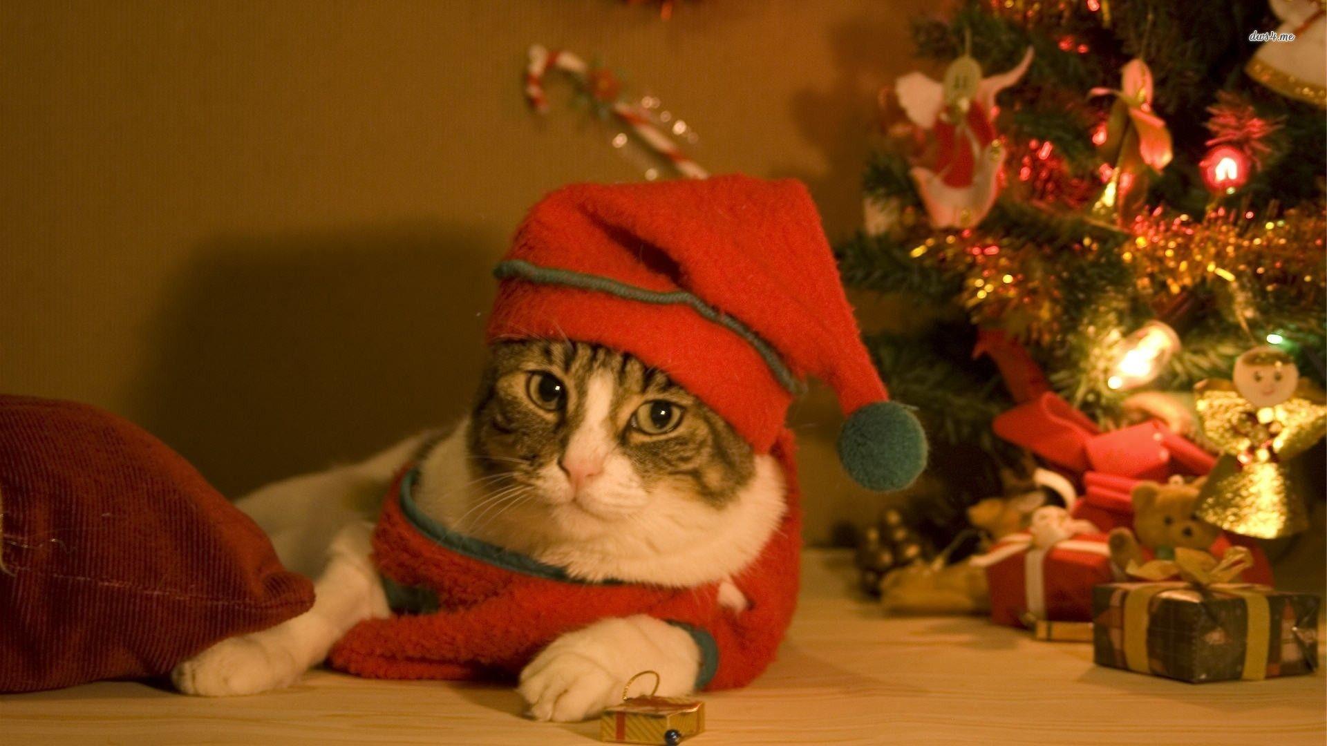 Hình nền mèo dễ thương giáng sinh