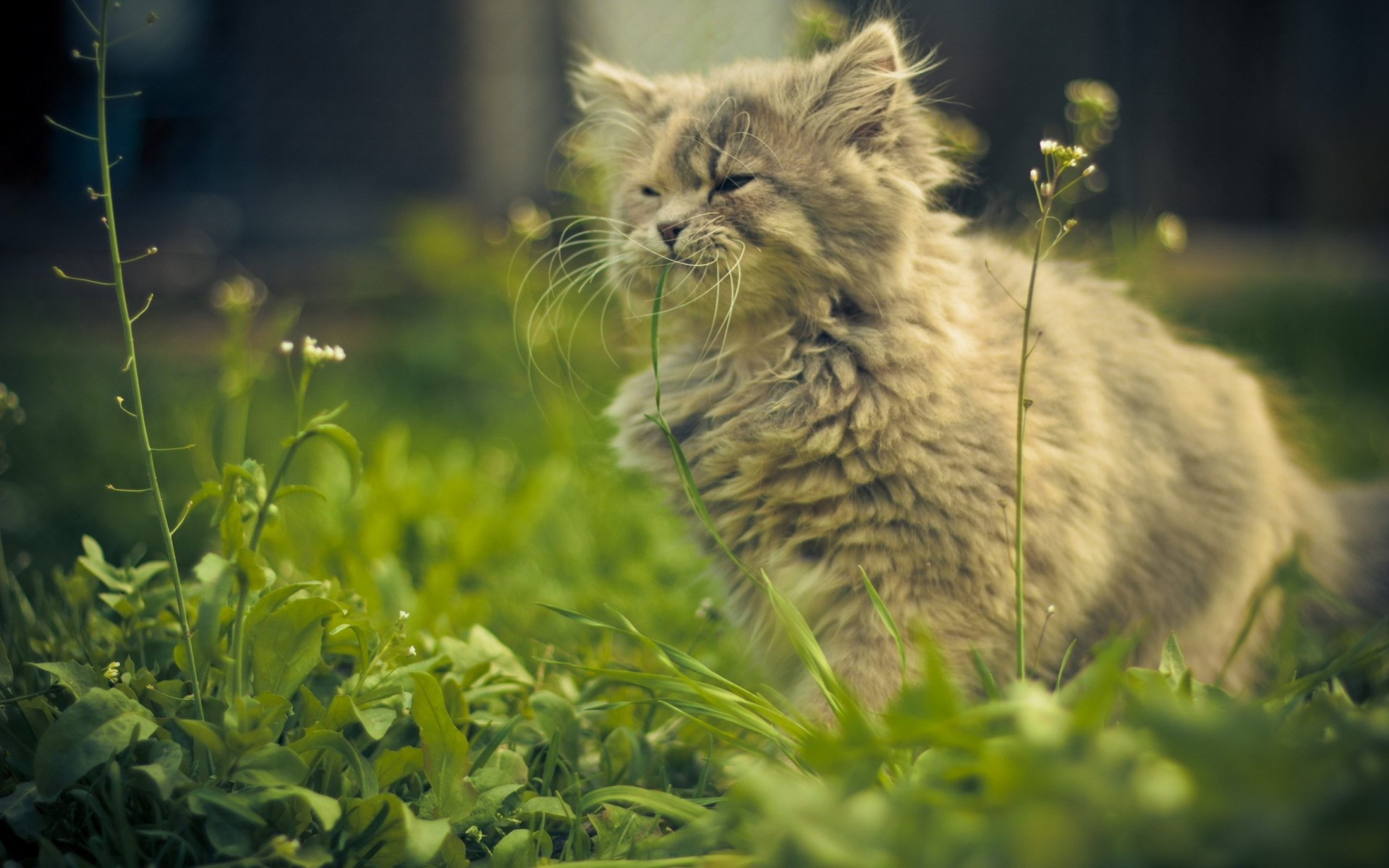Hình nền mèo dễ thương ngộ nghĩnh