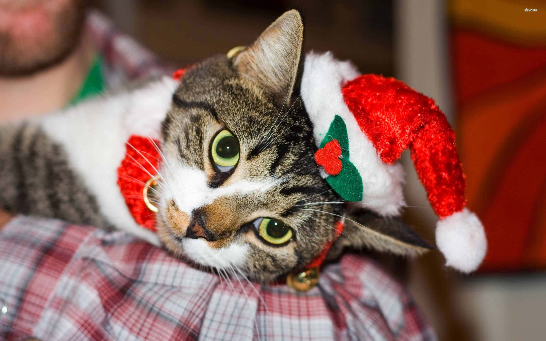 Hình nền mèo Giáng sinh