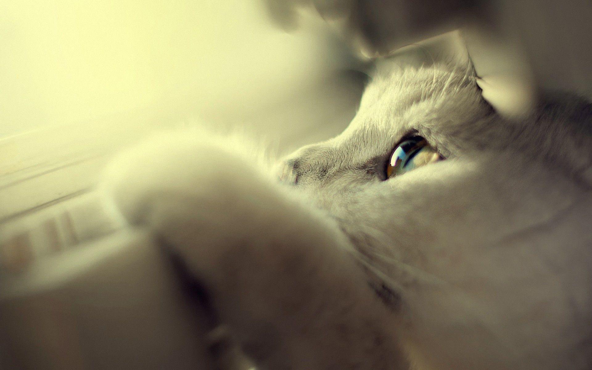 Hình nền mèo mộng mơ