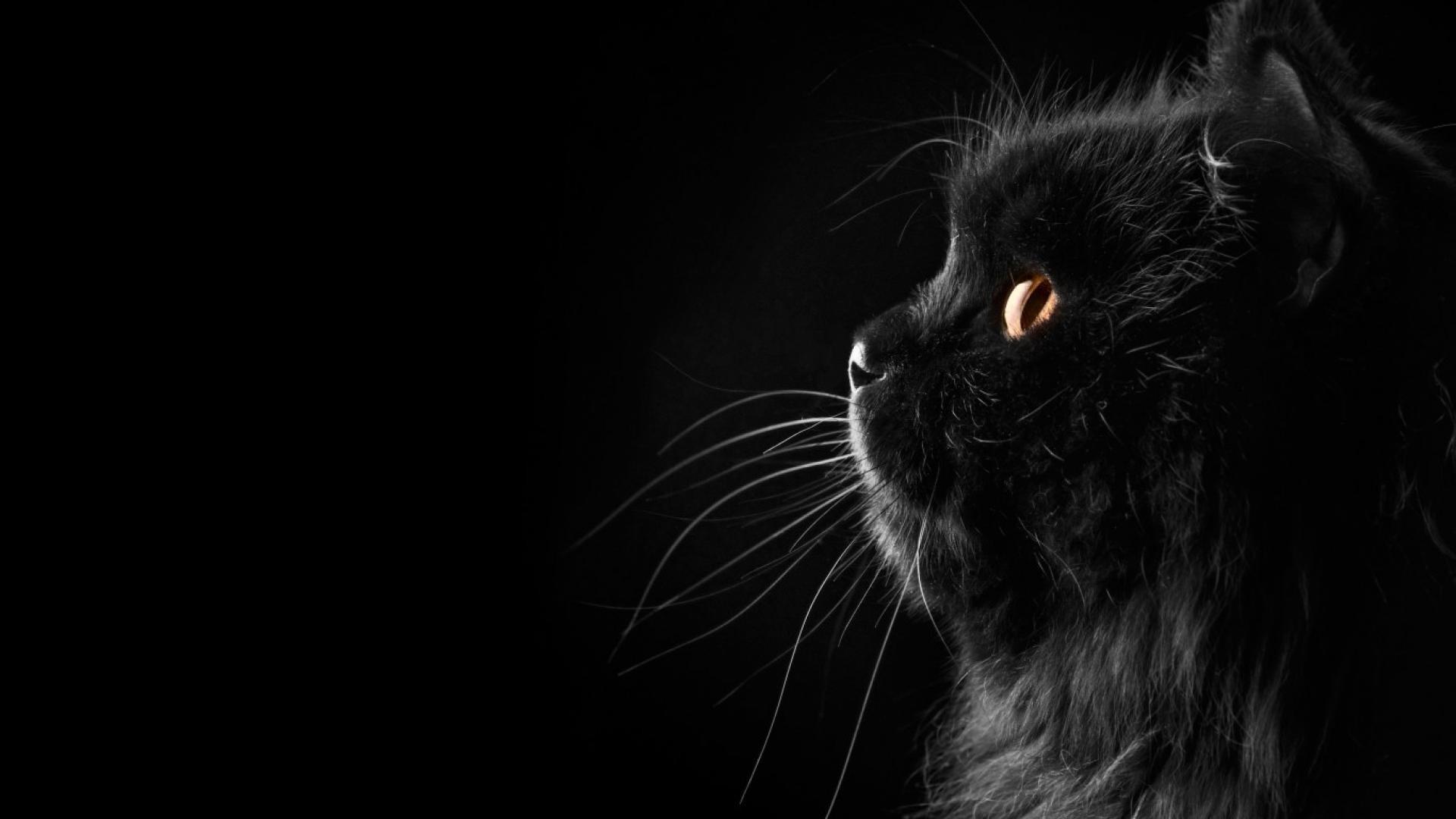 Hình nền mèo ngộ nghĩnh