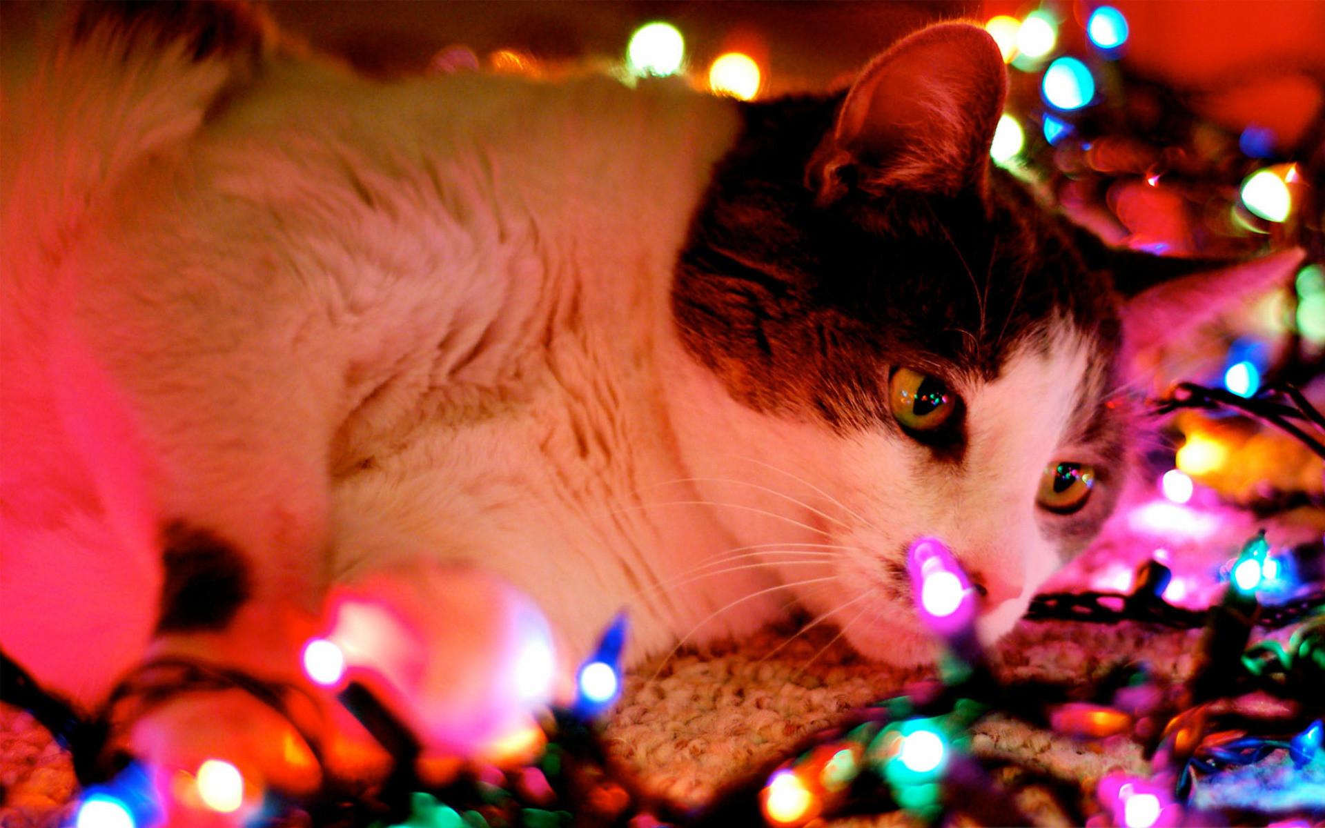Hình nền mèo và đèn