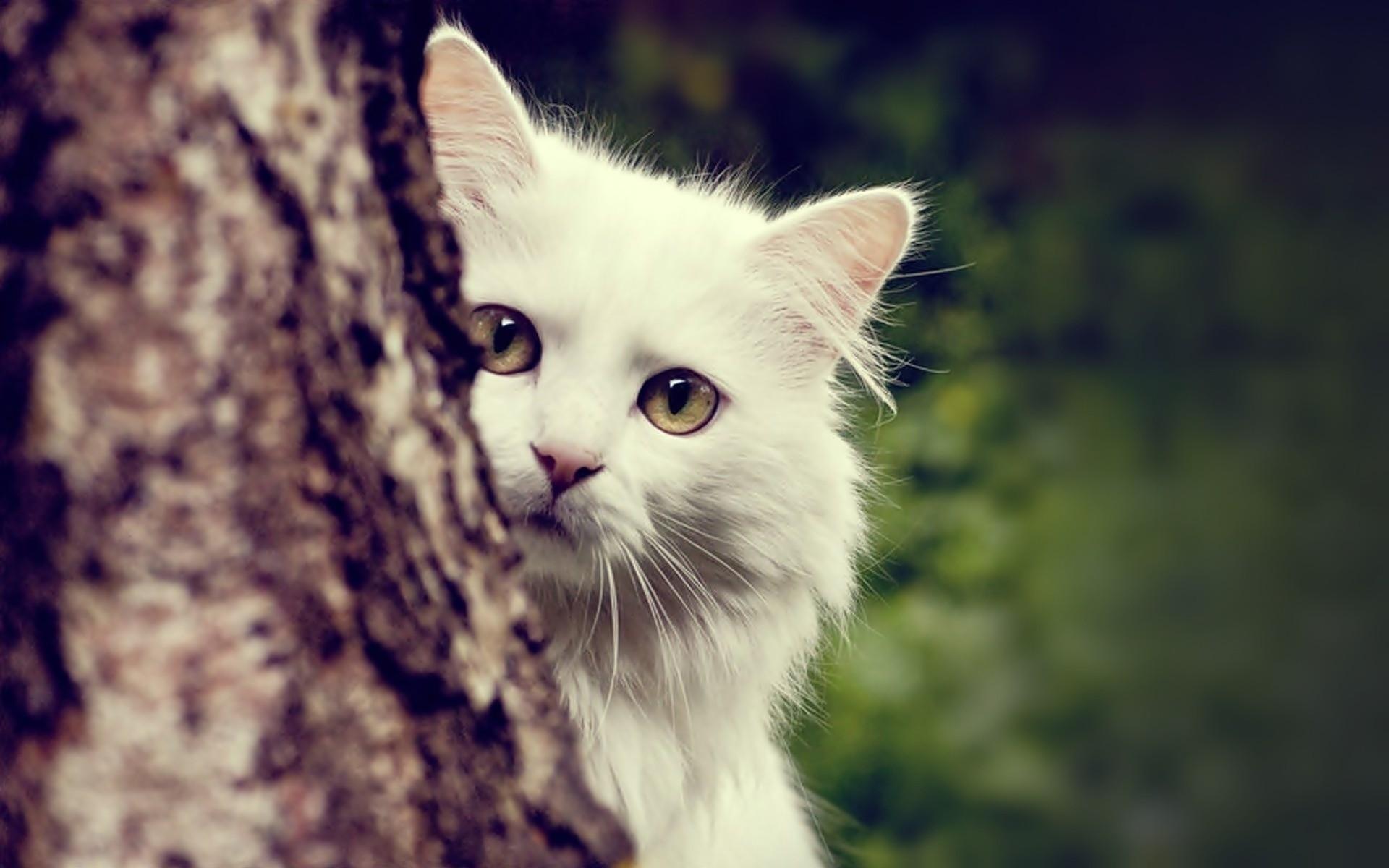 Tổng hợp hình mèo dễ thương nhất