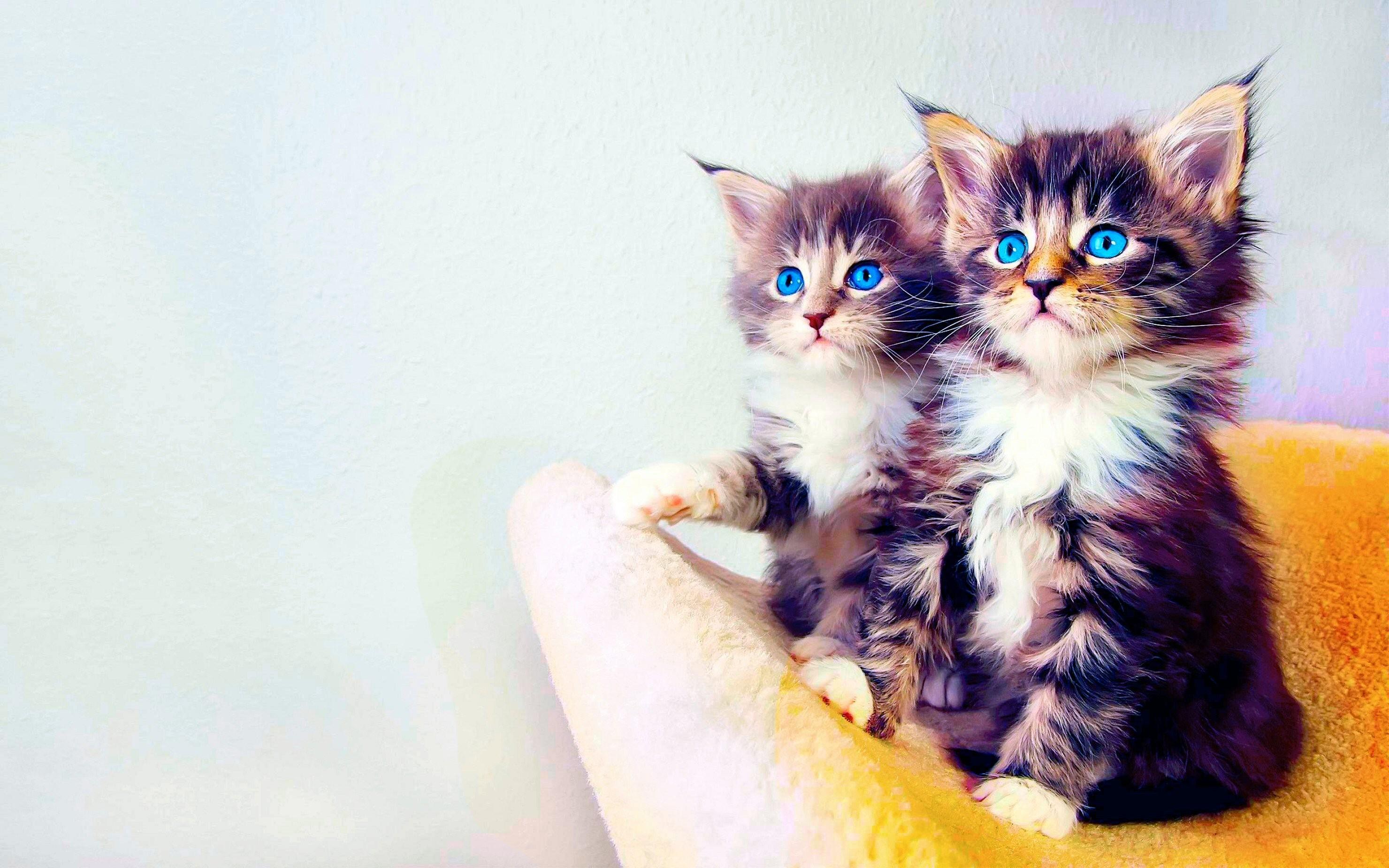 Tổng hợp hình nền mèo đáng yêu nhất