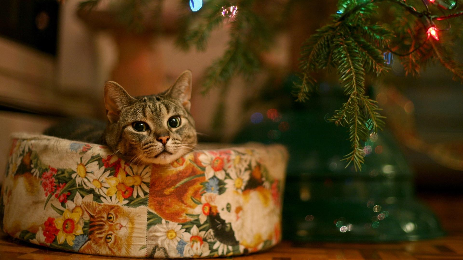 Tổng hợp những hình ảnh mèo đáng yêu đẹp nhất