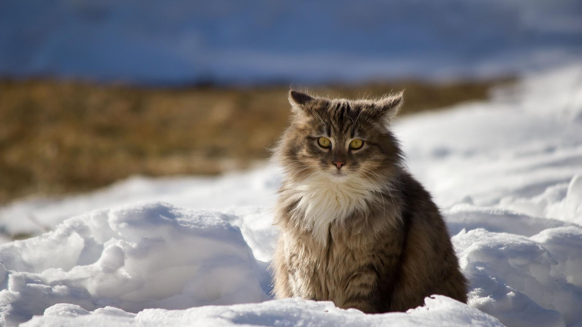 Tổng hợp những hình ảnh mèo đáng yêu
