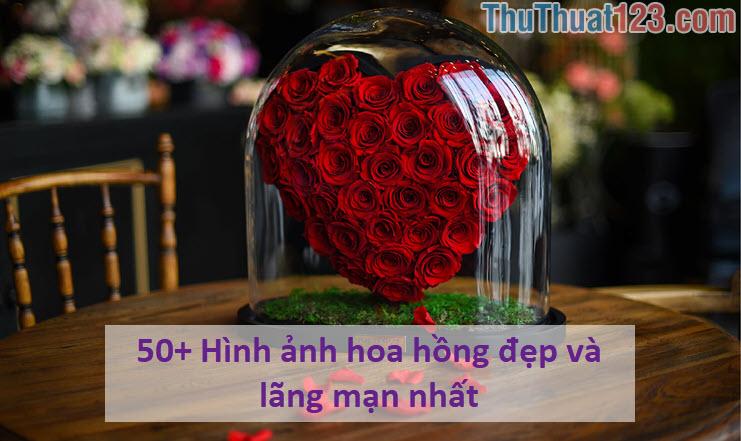 50+ Hình ảnh hoa hồng đẹp và lãng mạn nhất