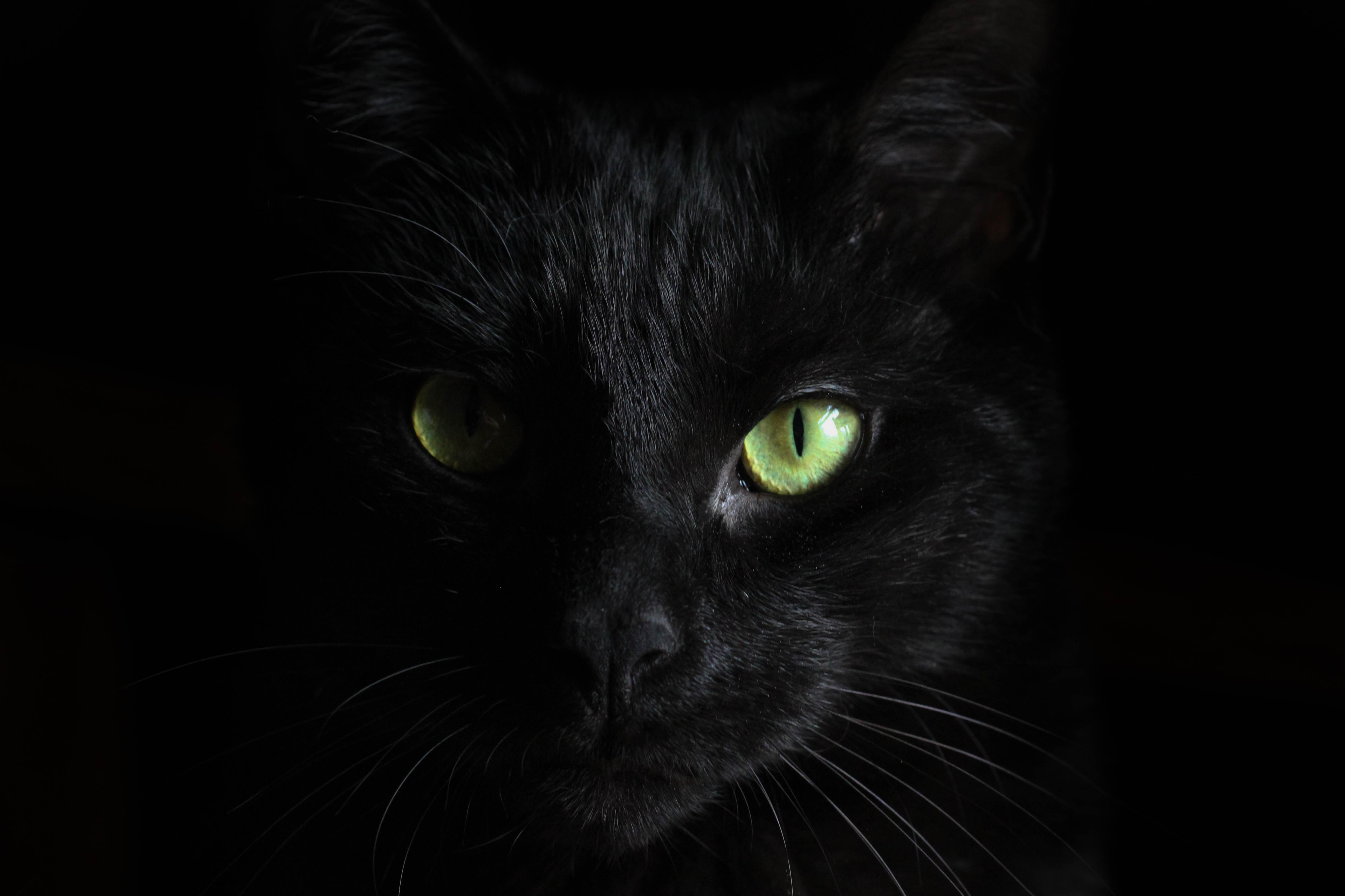 Hình nền màu đen mắt mèo