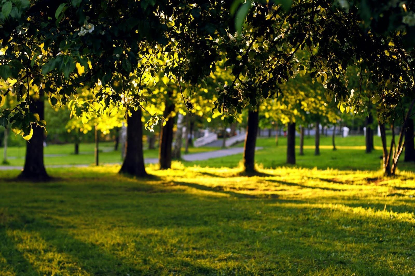 Ảnh phong cảnh đẹp với bãi cỏ xanh và cây che bóng mát