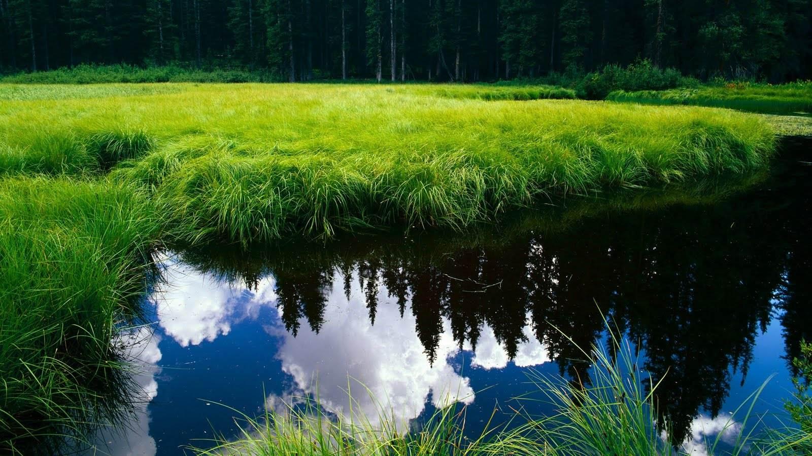 Ảnh phong cảnh thiên nhiên mặt hồ xanh ngắt và bãi cỏ xanh