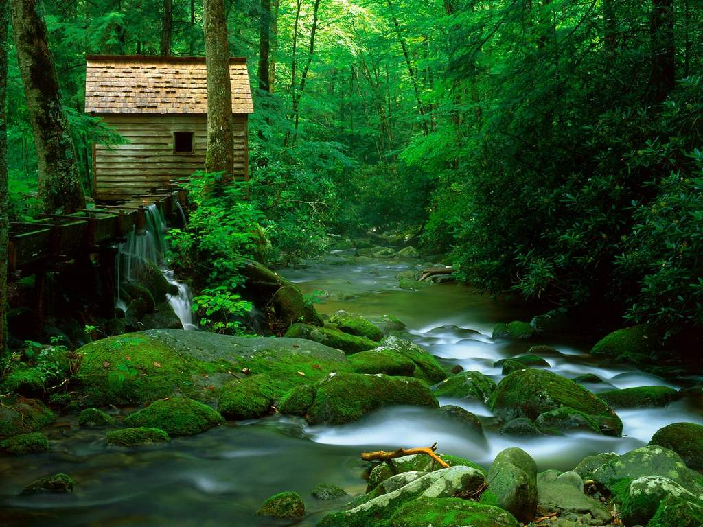 Căn nhà gỗ trong rừng xanh bên suối nước thiên nhiên tươi đẹp