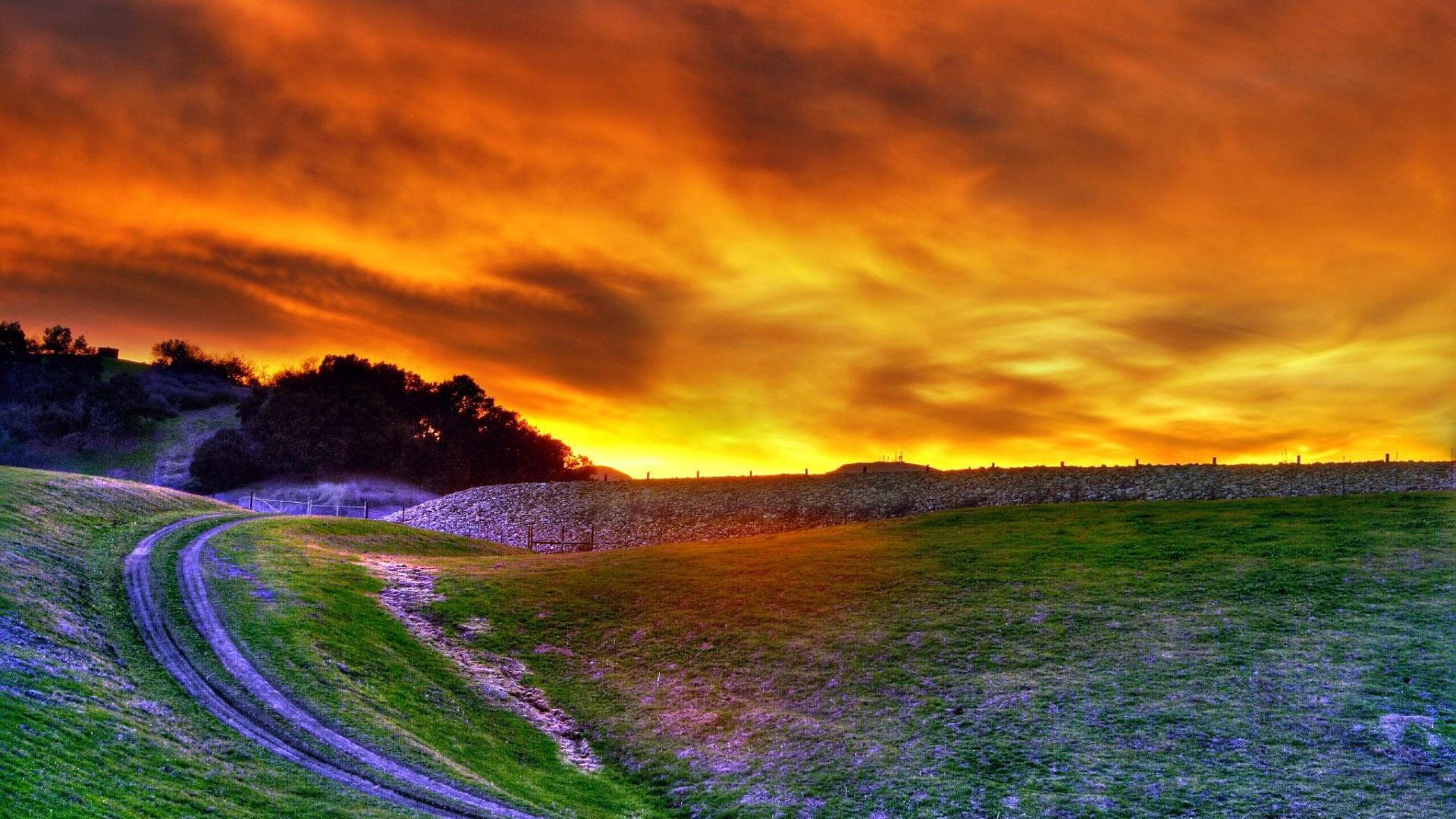 Cảnh đẹp thiên nhiên hoàng hôn trên cánh đồng hoa