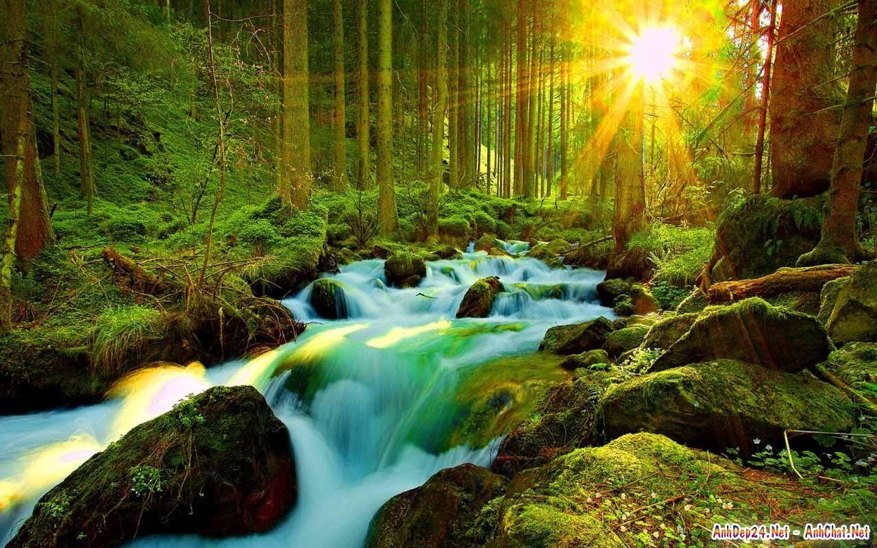 Cảnh đẹp thiên nhiên suối trong rừng sâu