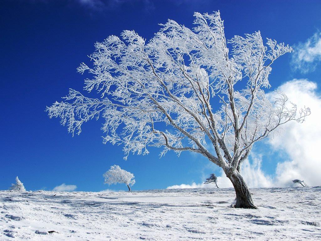 Cảnh thiên nhiên đẹp cây tuyết trên nền băng