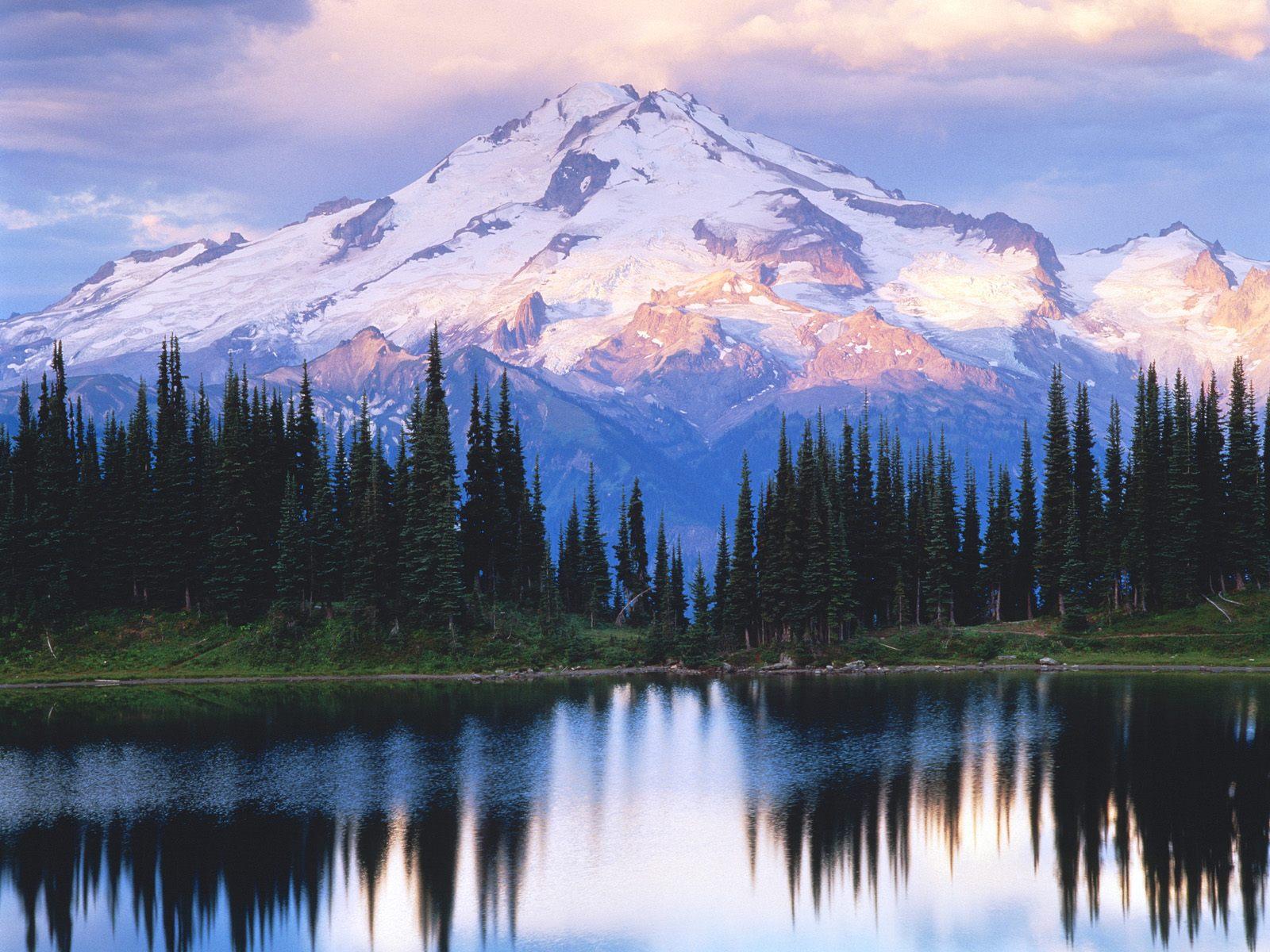 Cảnh thiên nhiên đẹp núi tuyết và rừng thông