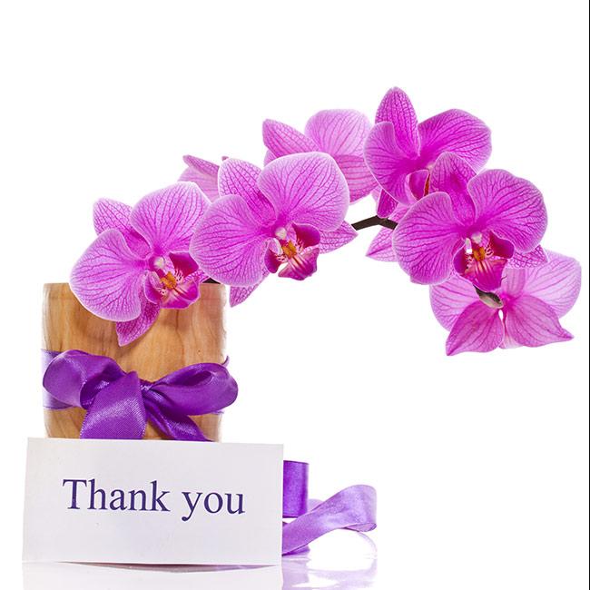 Hình ảnh cảm ơn và hoa