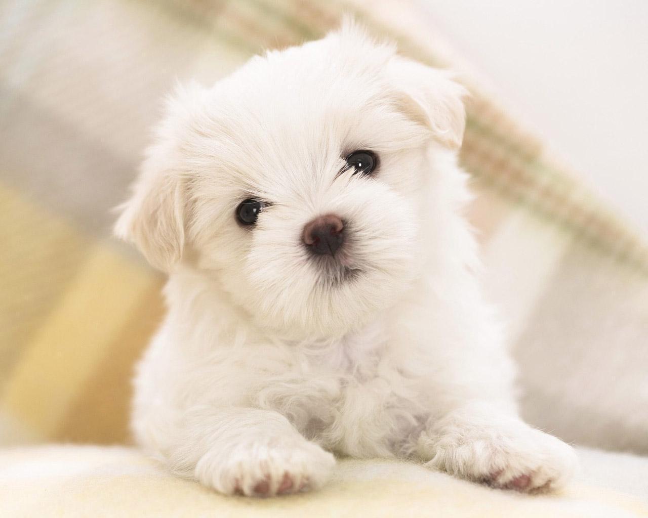 Hình nền chú chó con đáng yêu