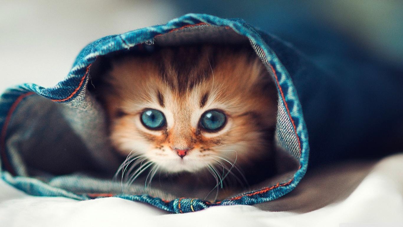 Hình nền chú mèo chui vào ống quần rất dễ thương
