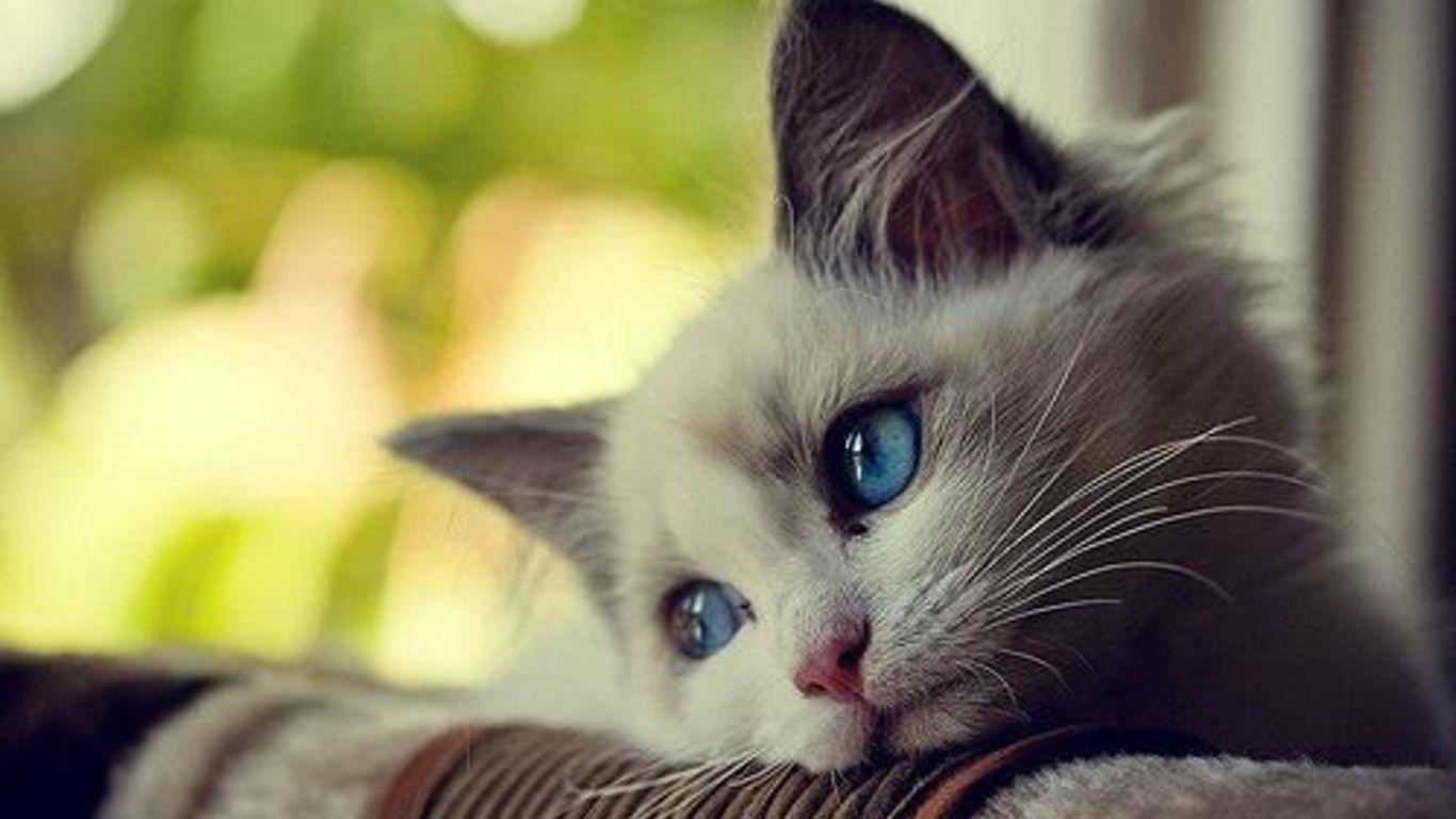 Hình nền chú mèo cute đáng yêu