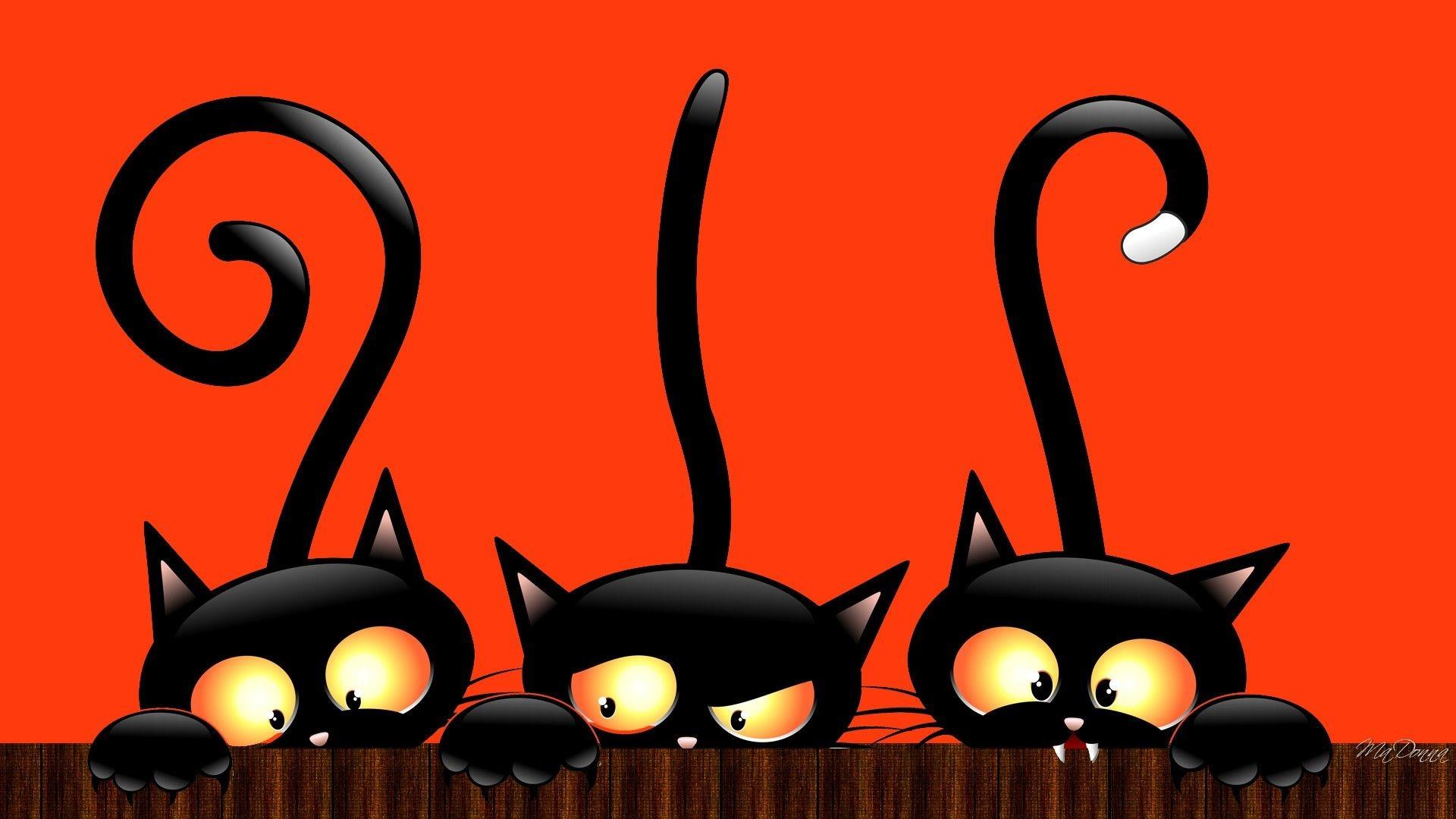 Hình nền những chú mèo đen đáng yêu