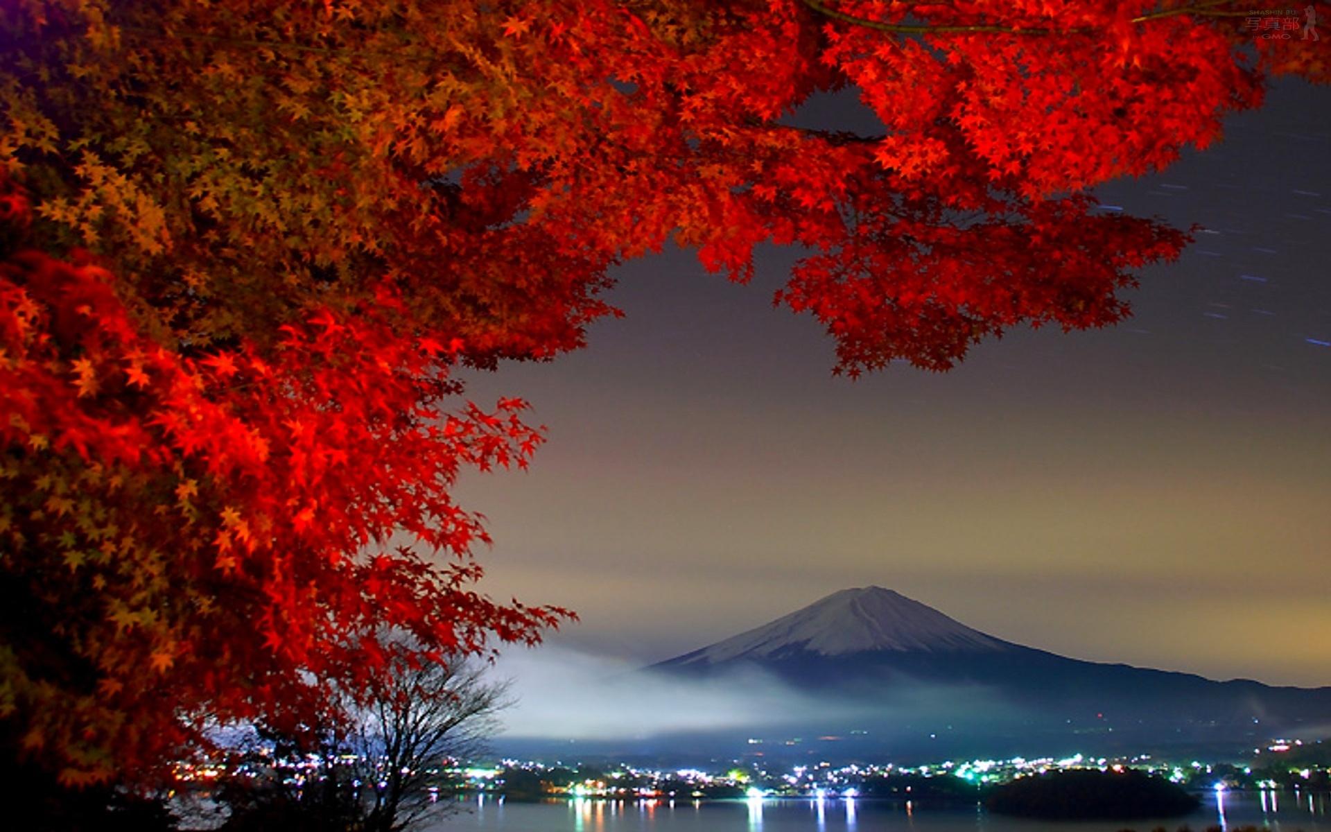 Phong cảnh thiên nhiên tuyệt đẹp với cây phong lá đỏ