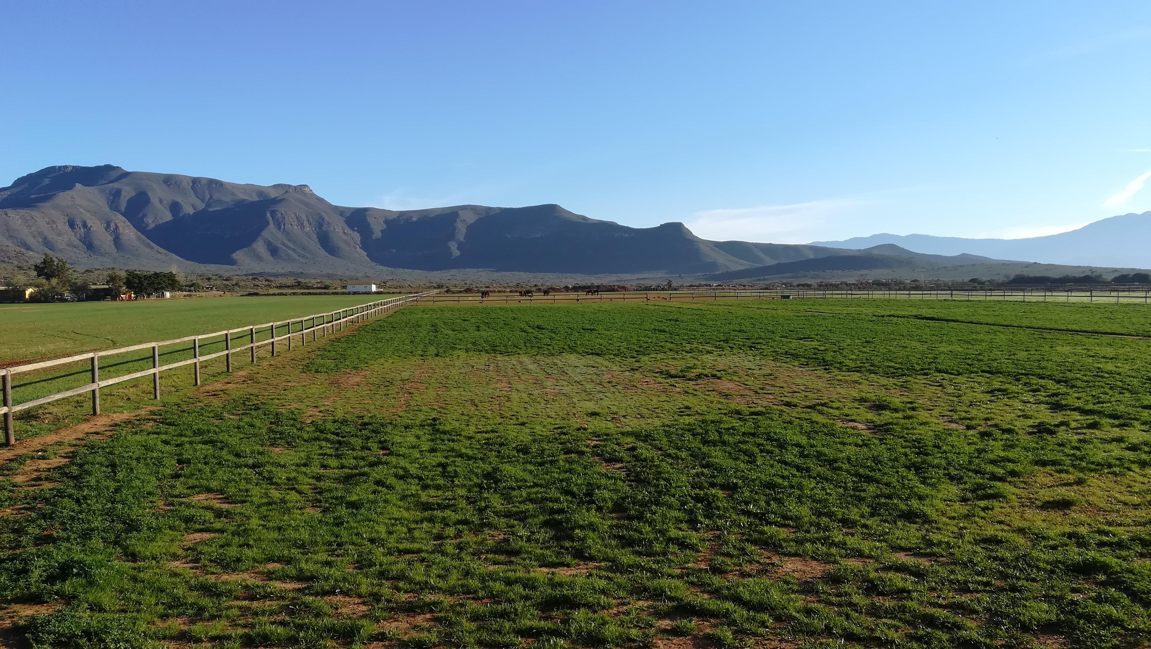 Thiên nhiên tươi đẹp cùng bức ảnh chụp đồng cỏ chăn nuôi