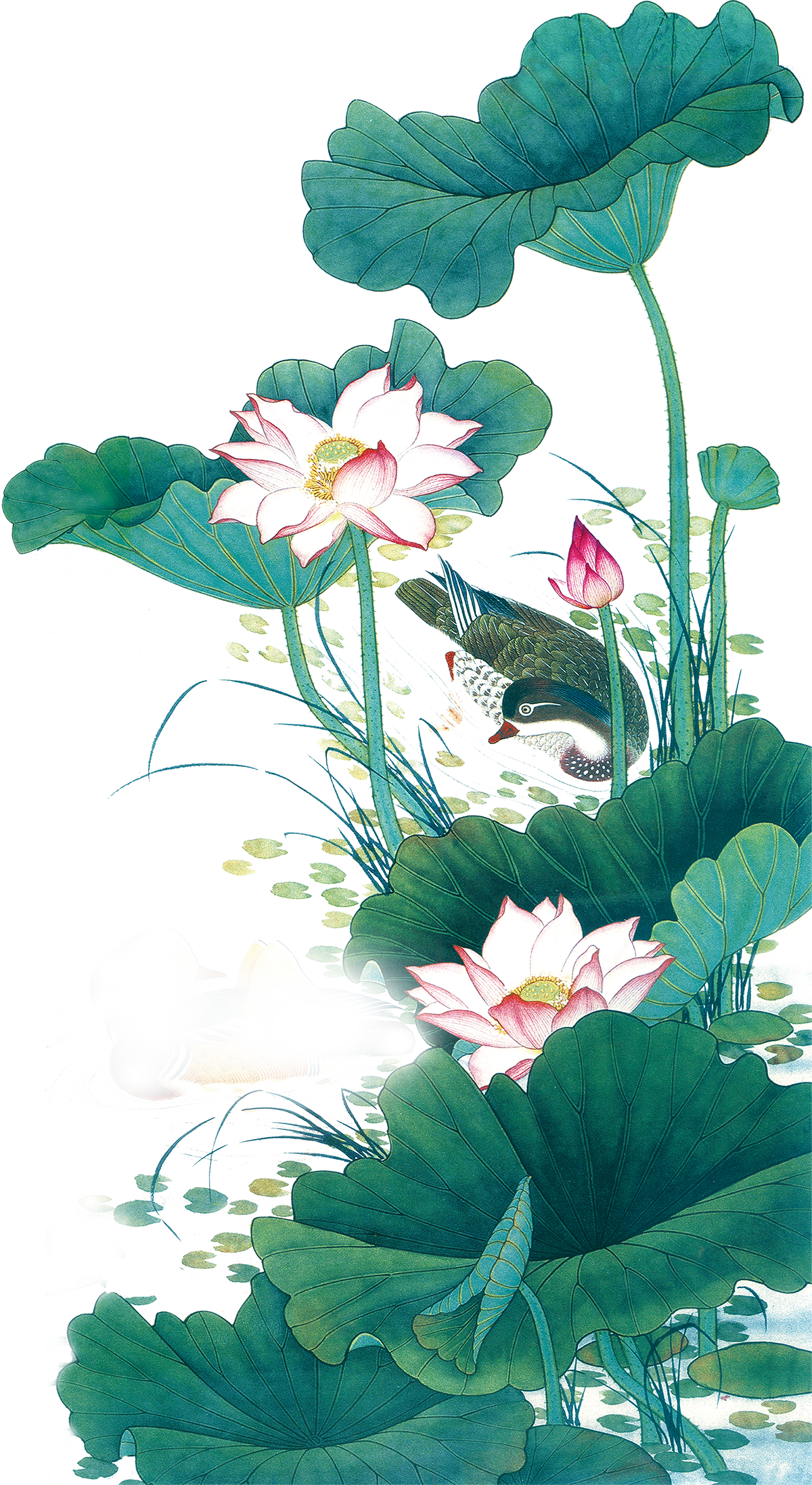 Hình vẽ hoa sen rất đẹp