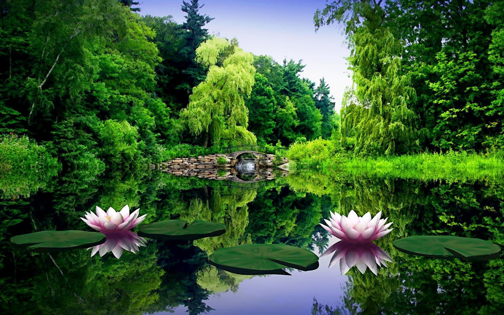 Hoa sen trong khung cảnh thiên nhiên thơ mộng