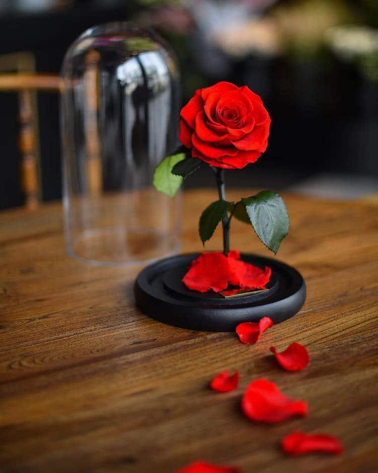 Ảnh hoa hồng đẹp và lãng mạn