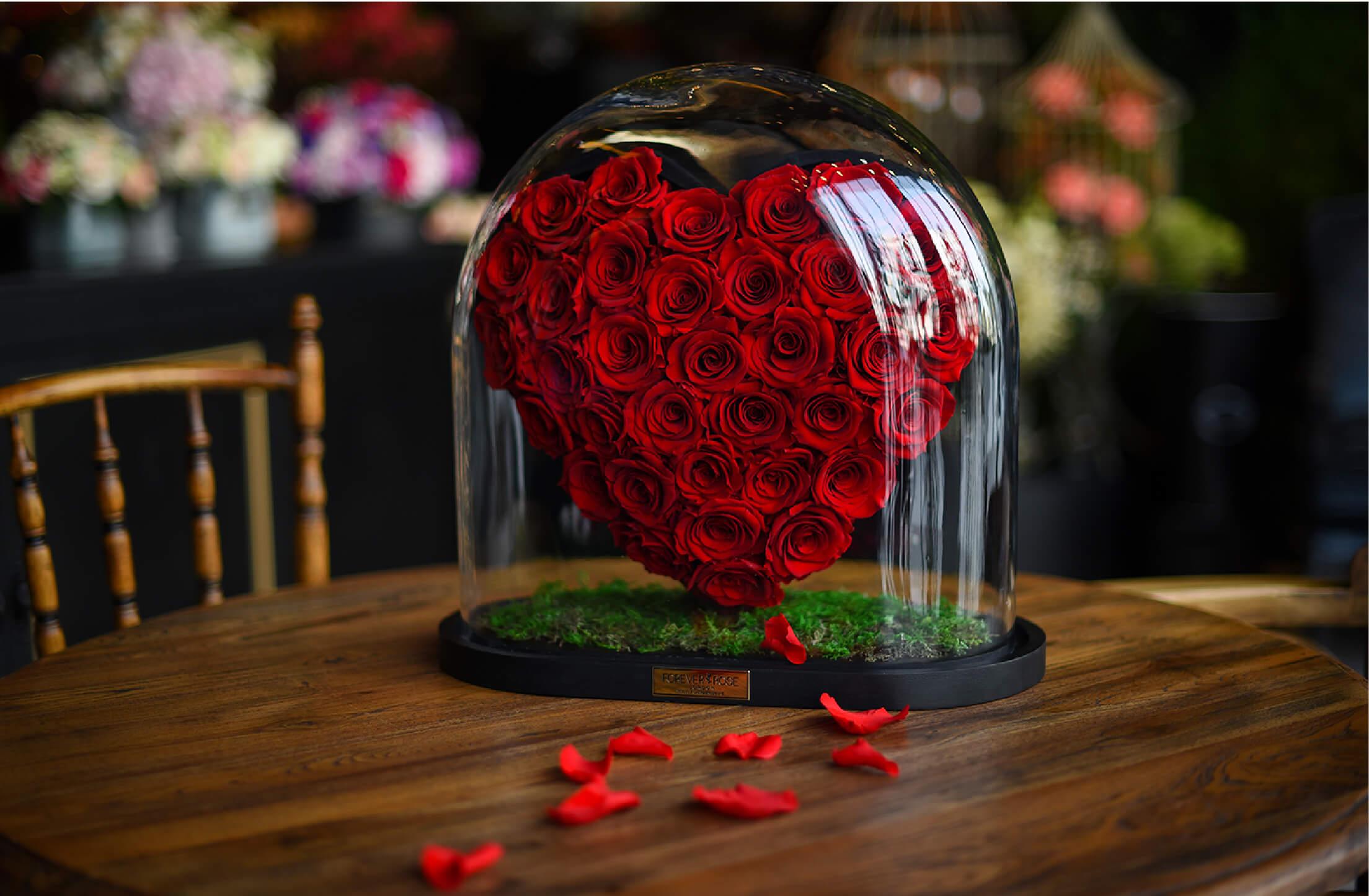 Hình ảnh hoa hòng đẹp nhất