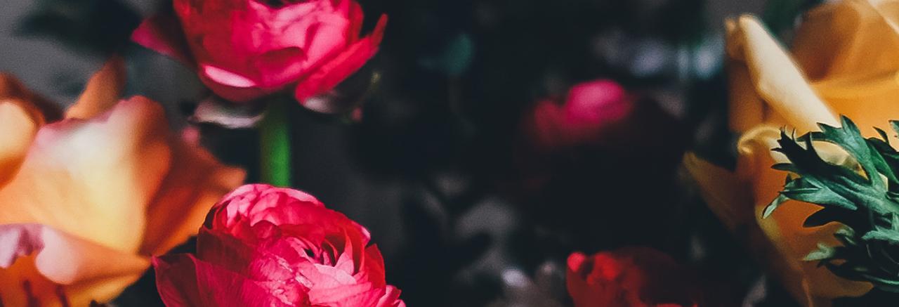 Hình ảnh hoa hồng lãng mạn và đẹp