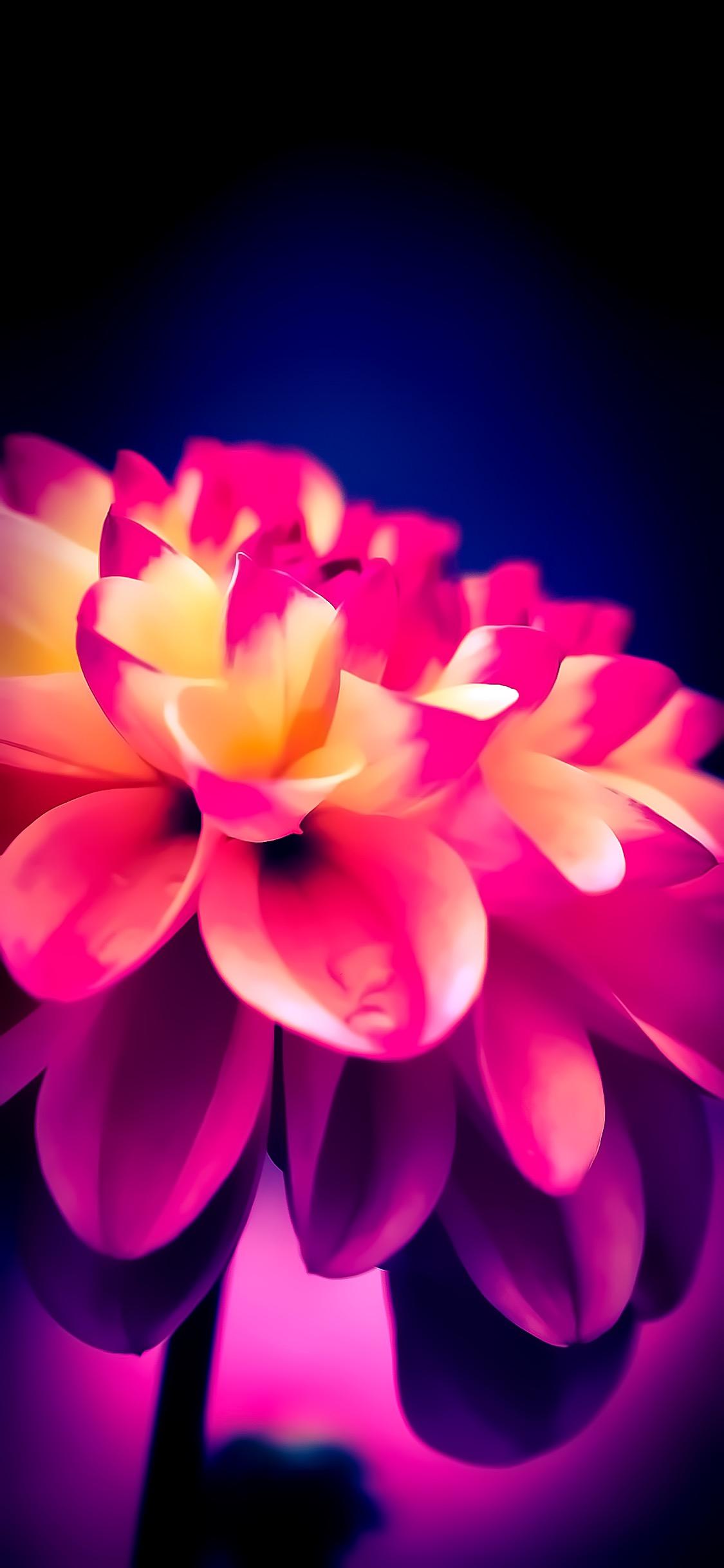 hình nền iphone x hoa