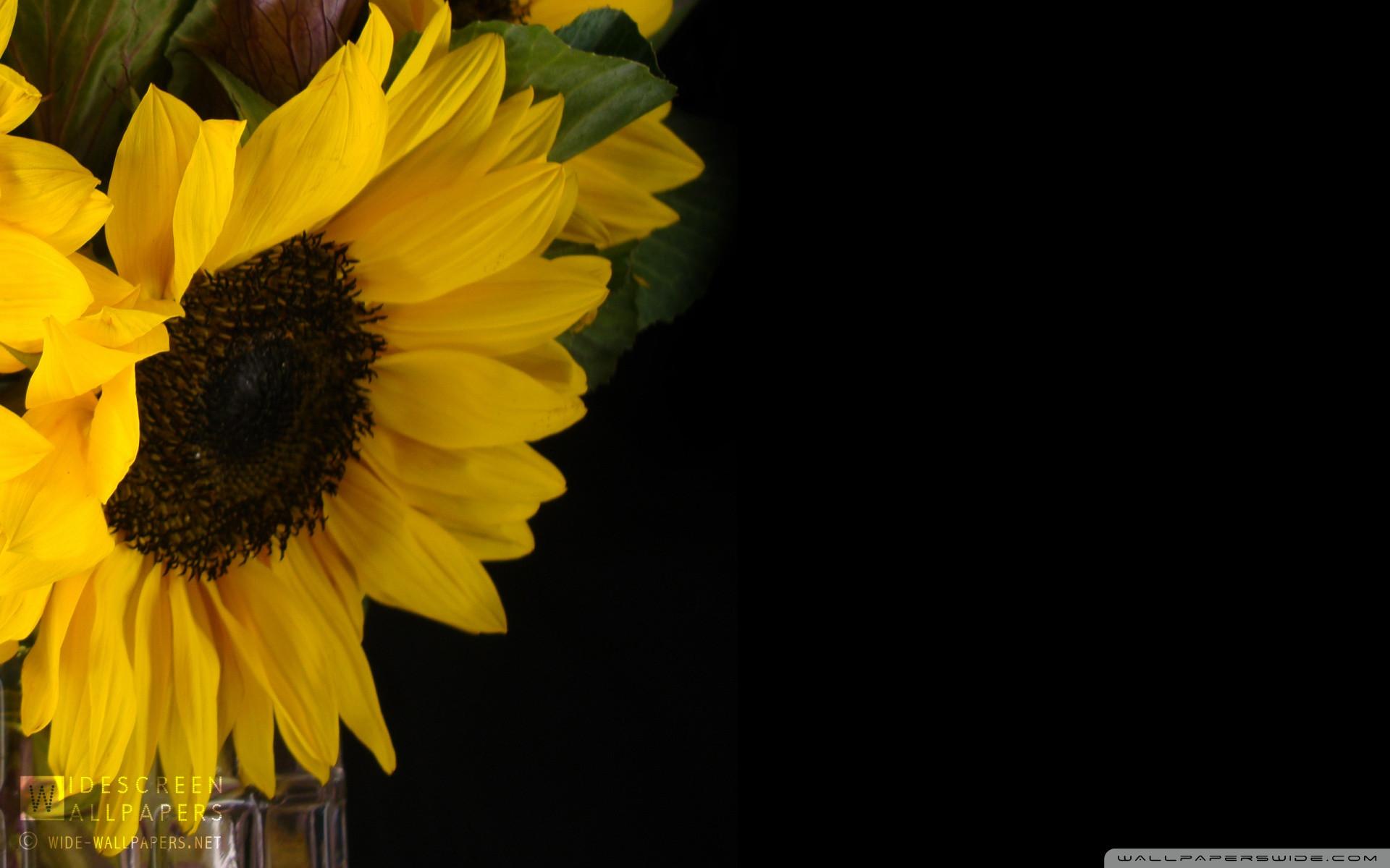 Hình nền hoa cho Laptop