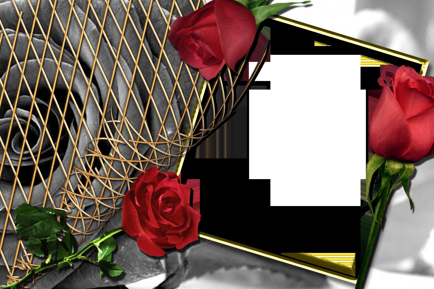Khung ảnh hoa hồng dùng trong Photoshop