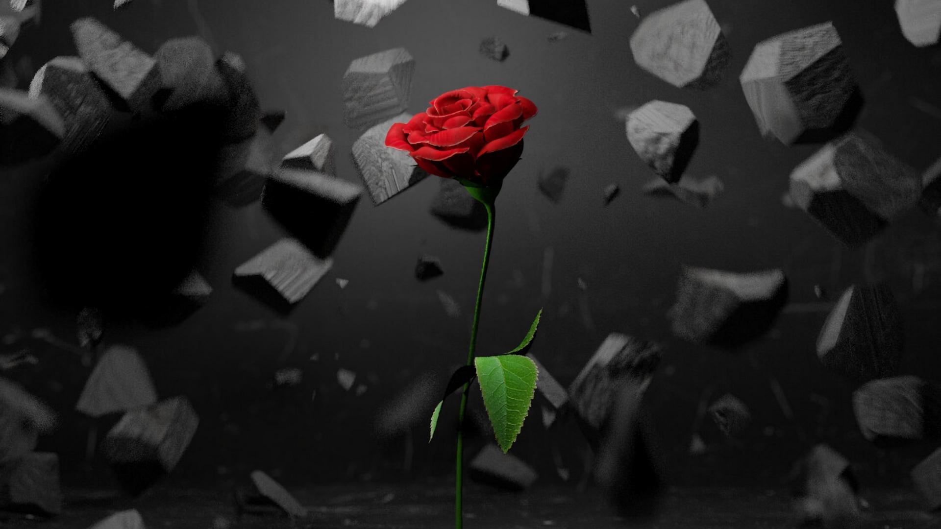 Hình nền hoa hồng đẹp